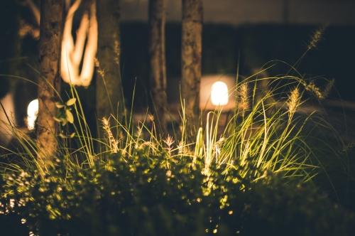 blur-bright-close-up-698317